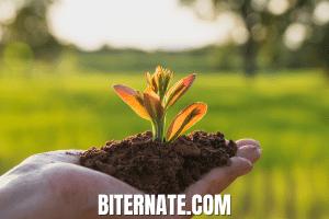 Biternate.com at BigDad Brand names Start-up Business Brand Names. Creative and Exciting Corporate Brand Deals at BigDad.com
