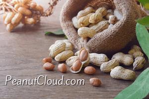 PeanutCloud.com at BigDad Brand names Start-up Business Brand Names. Creative and Exciting Corporate Brand Deals at BigDad.com