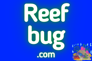 ReefBug.com at StartupNames Brand names Start-up Business Brand Names. Creative and Exciting Corporate Brand Deals at StartupNames.com.